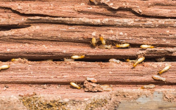 How to get rid of termites in furniture